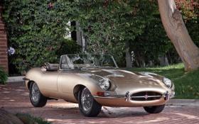 Обои дерево, ягуар, кабриолет, классика, jaguar, передок, красивая машина