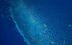 Обои sea, blue, fine, coral