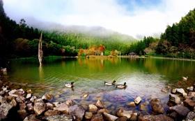 Картинка камни, пруд, утки, деревья, природа, парк, озеро