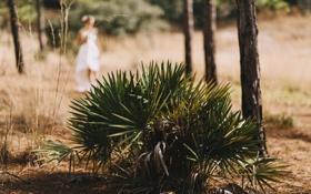 Обои листья, девушка, растение, невеста