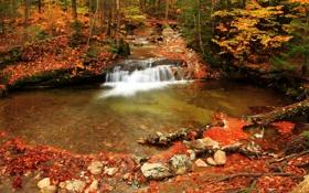 Обои лес, осень, деревья, водопад, ручей, камни