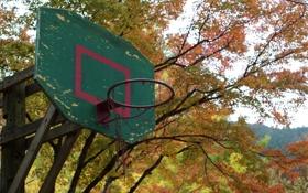Картинка фон, спорт, щит, баскетбол