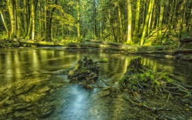 Обои лес, деревья, река, дно