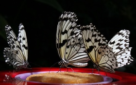 Картинка бабочки, фон, черный, три