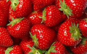 Обои фон, клубника, fresh berries, strawberry, ягоды