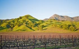 Обои поле, небо, холмы, виноградник