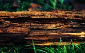 Обои дерево, ствол, бревно, кора, сухое