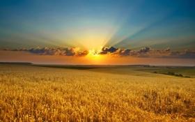 Картинка закат, облака, горизонт, небо, фото, лучи света, поле