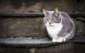 Обои ступени, взгляд, кошка