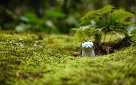 Обои зелень, кошка, ростки, мох, статуэтка, папоротник