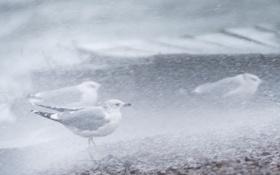 Обои птицы, дождь, ветер