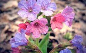 Обои лес, цветы, весна
