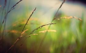 Картинка зелень, трава, макро, размытость, колосок