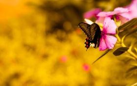 Картинка цветок, розовый, бабочка, flower, pink, butterfly