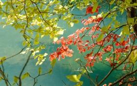 Картинка листья, деревья, ветки, фон, зеленые, красные