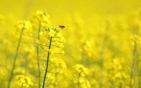 Обои цветок, макро, Желтый