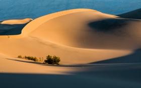 Картинка песок, трава, пустыня, тень, дюны, солнечно