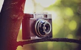 Обои дерево, камера, фотоаппарат, объектив