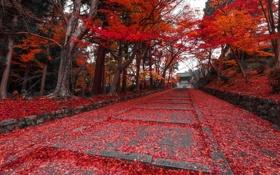 Картинка осень, листья, парк, ступени, аллея, багрянец