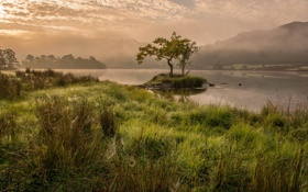 Картинка закат, река, дерево