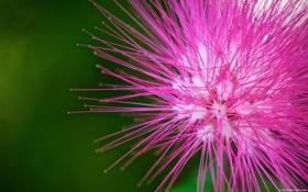 Обои цветок, макро, Pink flower