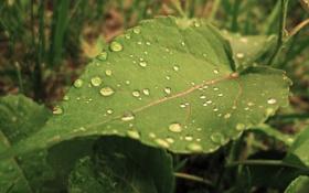Обои вода, капли, лист, роса, фокус, зелёный