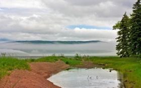 Картинка лес, деревья, тучи, туман, пруд, река, холмы