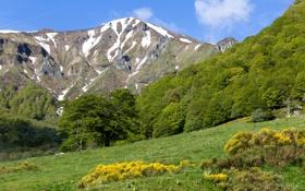 Картинка кусты, деревья, трава, зеленьMont-Dore, Франция, склон, горы