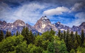 Обои деревья, горы, Вайоминг, Wyoming, Гранд-Титон, Grand Teton National Park