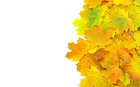 Картинка листья, ворох, осень, прожилки