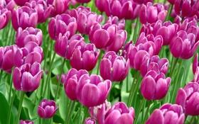 Обои поле, цветы, природа, обои, красота, сад, макро фото