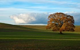 Картинка поле, осень, дерево, Природа