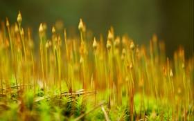 Обои макро, свет, природа, растения