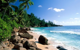Картинка песок, море, облака, камни, пальмы, заросли