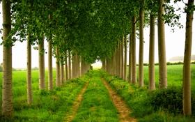 Картинка дорога, деревья, природа, весна