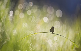Картинка лето, трава, блики, бабочка, травинка