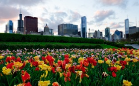 Картинка небо, цветы, здания, небоскребы, тюльпаны, USA, америка
