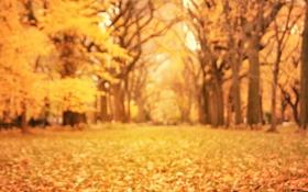 Обои осень, желтые, размытость, листья, деревья, природа, оранжевые
