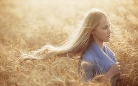 Картинка поле, лето, девушка, колосья