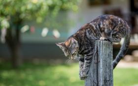 Картинка животные, котенок, забор, лапы, хвост