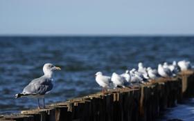 Картинка птицы, природа, чайки, nature, birds, сидя, sitting