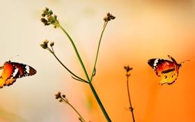 Картинка полет, бабочка, растение, крылья, стебель, мотылек