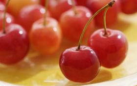 Обои макро, вишня, вишни, cherry