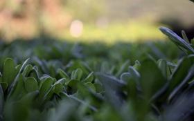 Картинка лето, трава, листья, природа, фон, обои, растения