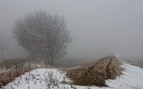 Картинка поле, осень, забор, туман