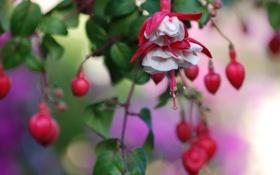 Обои цветок, листья, цвета, фон, растение, лепестки, размытость