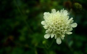 Обои цветы, природа, белое, зеленое