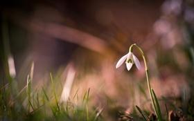 Обои трава, макро, цветы, блики, фокус, лепестки, стебель