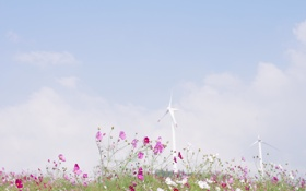 Картинка поле, небо, облака, цветы, природа, ветер, голубое