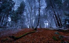 Обои листья, лес, осень, деревья, времена, зима, года